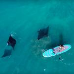 Встреча со скатами на одном из Гавайских побережий