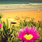 SUP Surf Trip в Марокко…