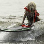 Пес учится сапсерфингу